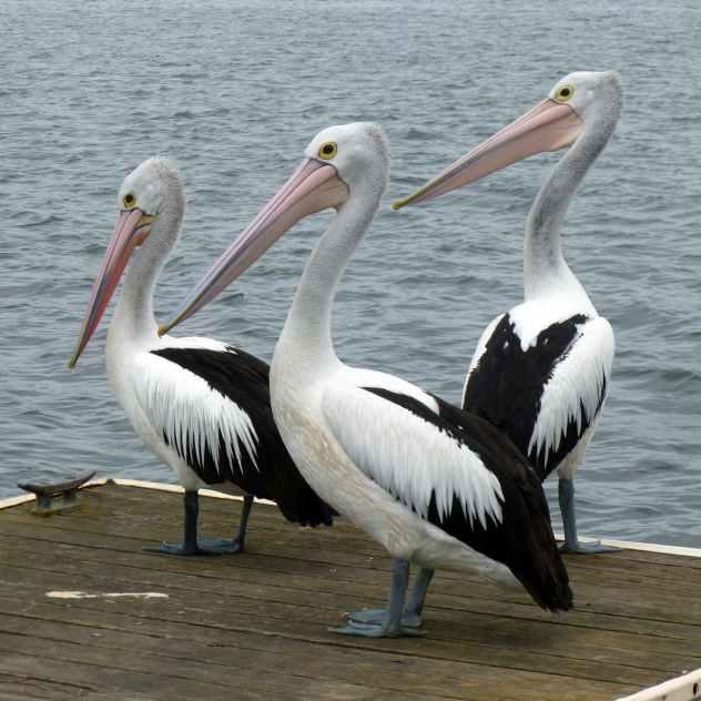 black and white long beak bird