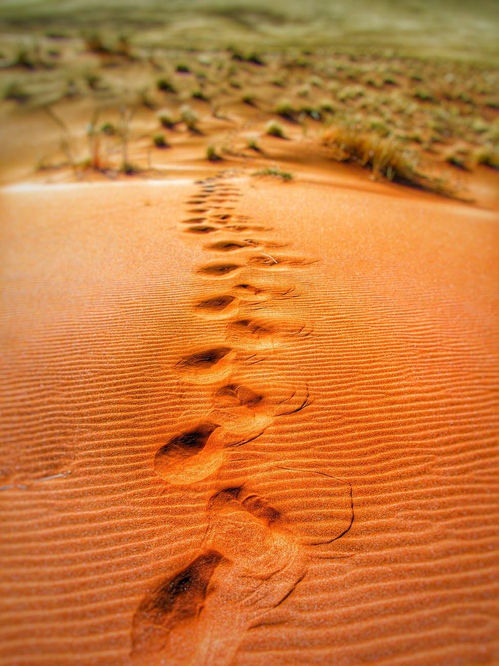 steps dune dunes sand dunes