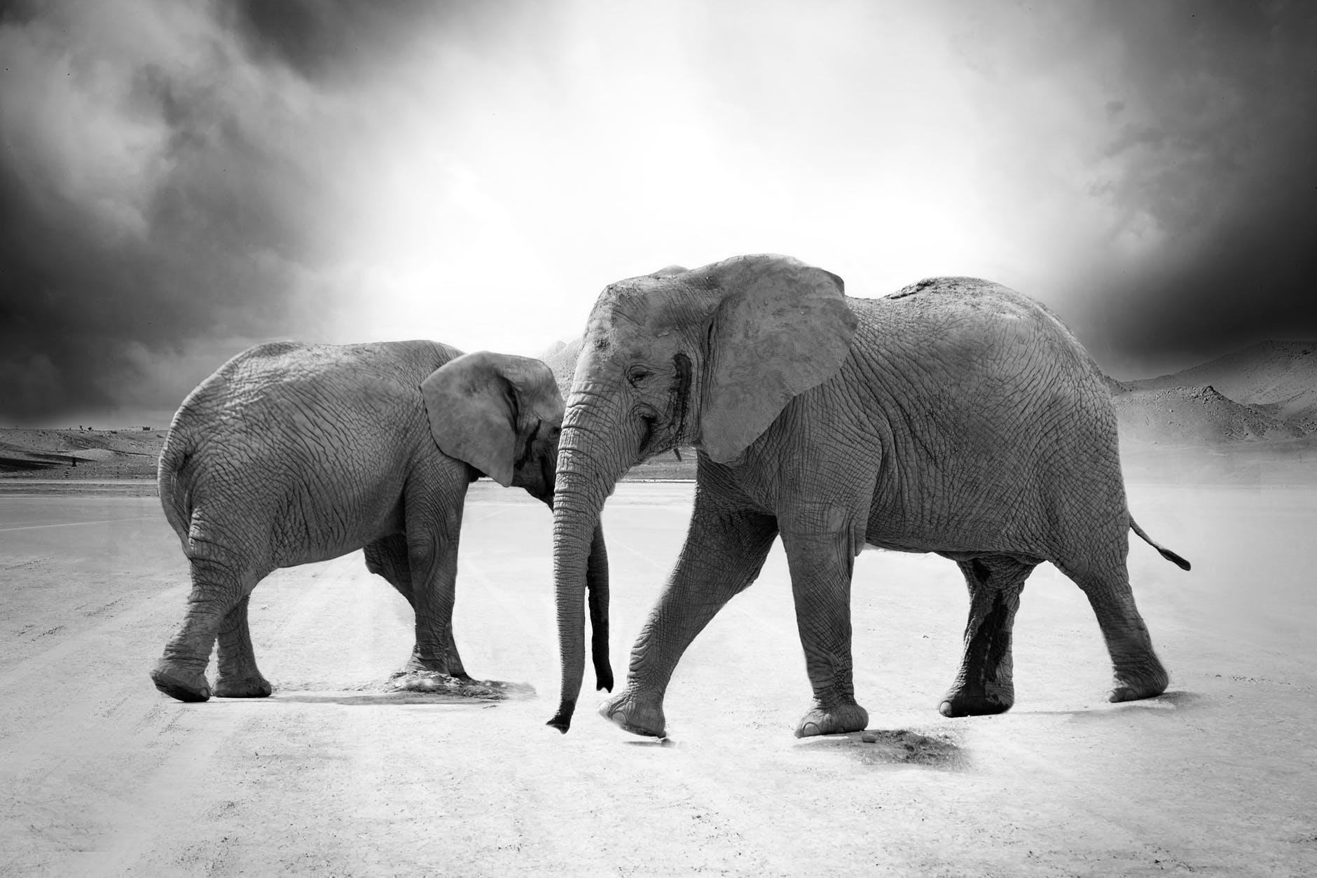 nature africa animals zoo